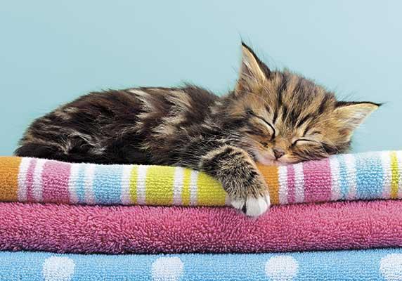 04859_sleepy_cat